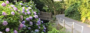 コワーキングスペース&シェアオフィスは鎌倉の明月院の近く
